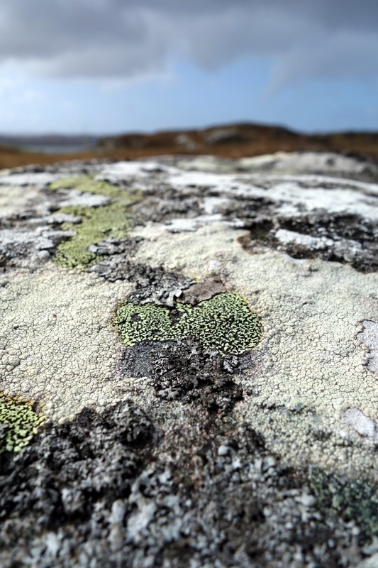 Hebridean Inspirations - Heather Potten - Felt Maker